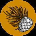 property-main-icon
